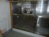 Cats rehabilitation ward